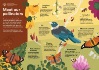A downloadable activity sheet called 'Meet our pollinators' with illustrations of native New Zealand flora and fauna. A link to the full text description of the activity sheet is below the image.